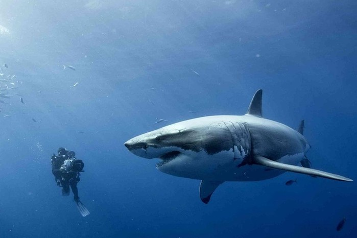 Рекламные мифы: Акулий хрящ излечит даже самые тяжелые случаи рака