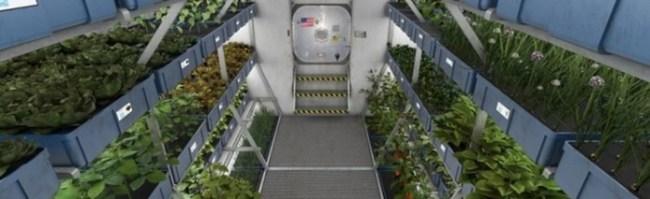 Как немцы выращивают овощи в Антарктиде на станции Neumayer