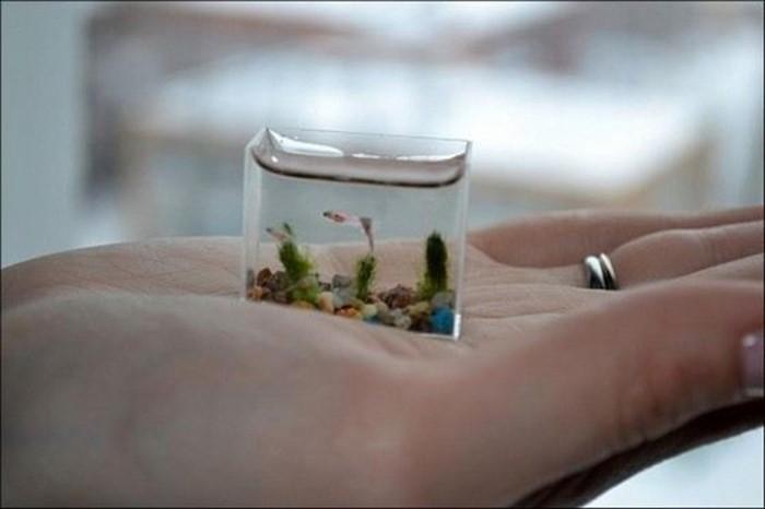 Самые маленькие рыбки в мире: как они называются и где водятся