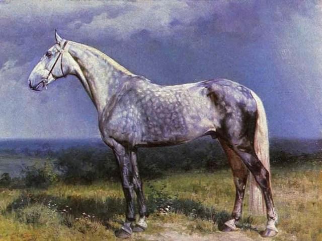 7 главных русских пород лошадей