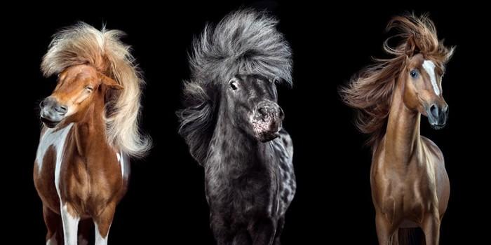 Флекки и другие стильные лошади на фотографиях Вибке Хаас