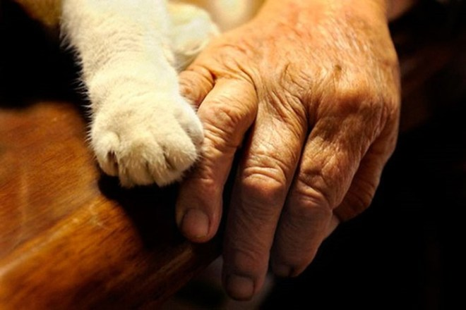 Неразлучные друзья: бабушка Миса и кошка Фукумару