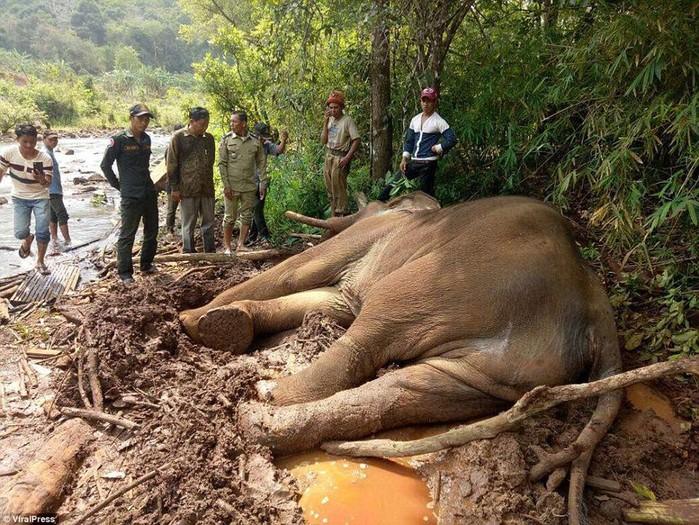 Хозяин слона беглеца разозлился и заморил его голодом