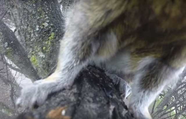 Зачем белка украла камеру у канадца и сняла свой побег на видео