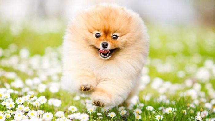 10 лучших пород собак для квартиры и детей: выбираем верного друга для ребёнка