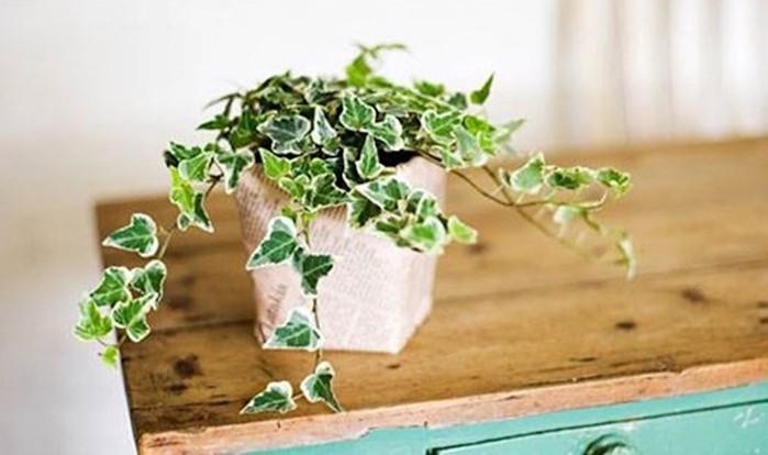 7 комнатных растений, которые решат проблему бессонницы