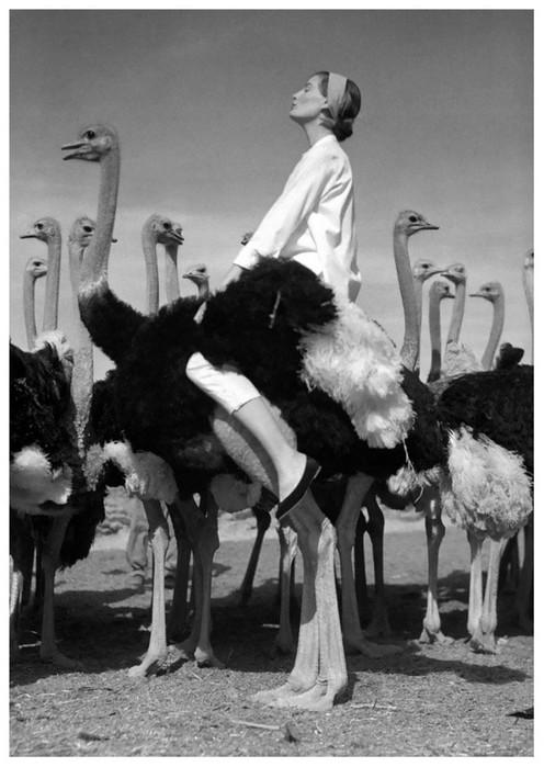 Норман Паркинсон— эксцентричный британский мастер, который вдохнул жизнь в модную фотографию