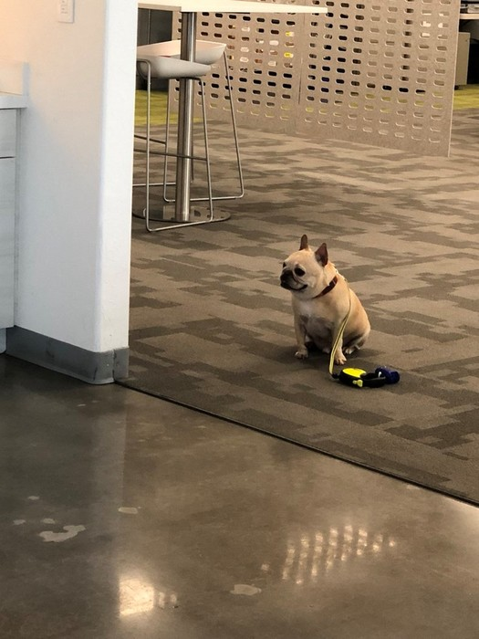 Слишком послушный пес расстроил пользователей сети