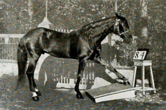 Самые умные и преданные лошади