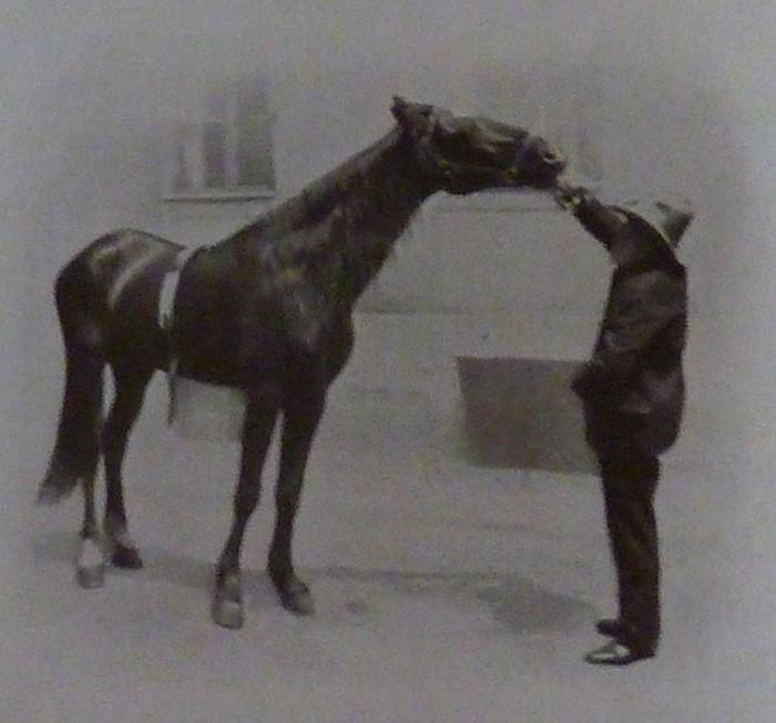 Умный Ганс, Магомет и Цариф: лошади, которые умели считать