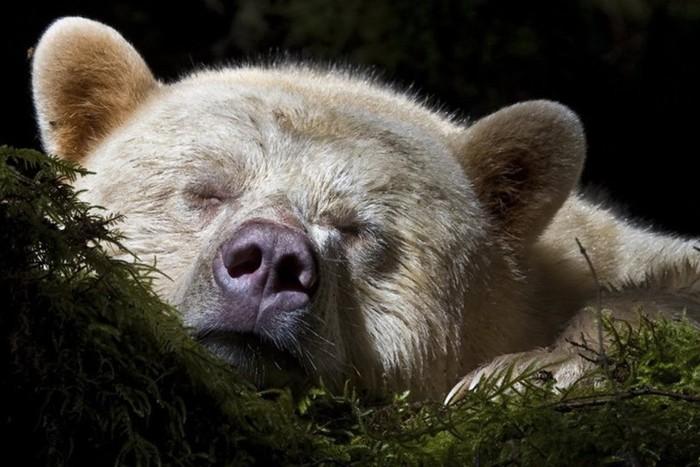 Спячка животных: самые глупые заблуждения