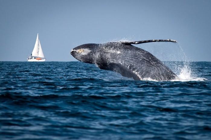 Почему самый большой на Земле океан назвали Тихим, если это не так?