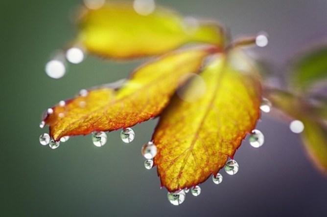 Утренняя роса: самые интересные факты