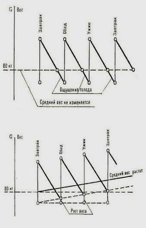 Harmaan anatomia koukku kaavio