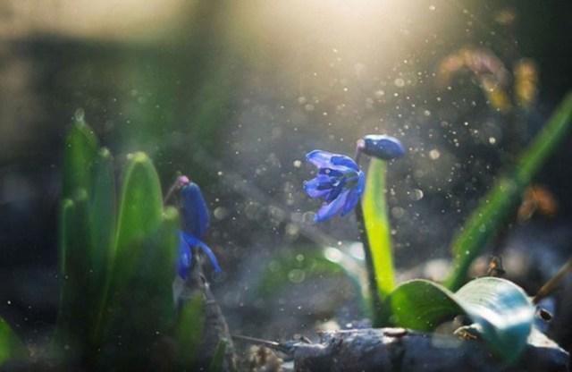 Минуты вдохновения: волшебные работы Инны Суховой