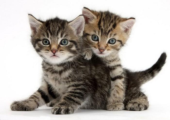 Немецкие ученые рассказали, как просто отличить котов от кошек