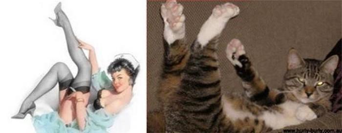 Забавные животные пародисты: фотографии