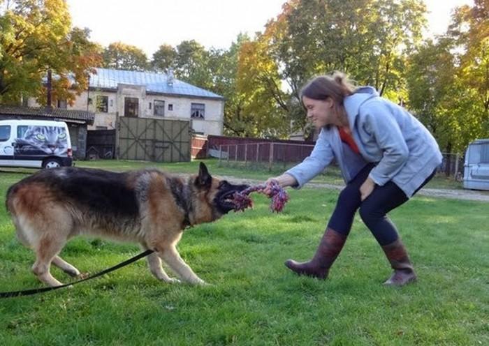 Джонатан, собака, которая охраняла жизни четырех латвийских президентов
