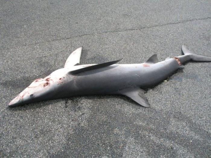 Как акула упала с неба на стоянку Лонг Айленда