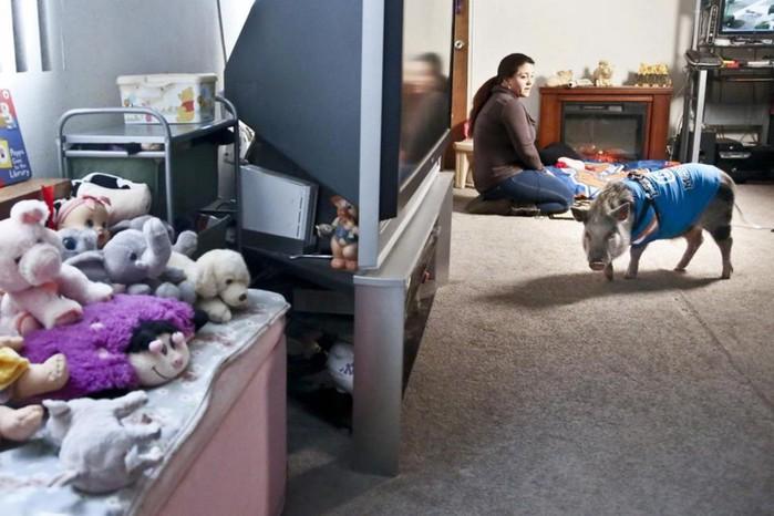 Свинья в Нью Йорке: фотографии поросенка в городской квартире матери и дочери