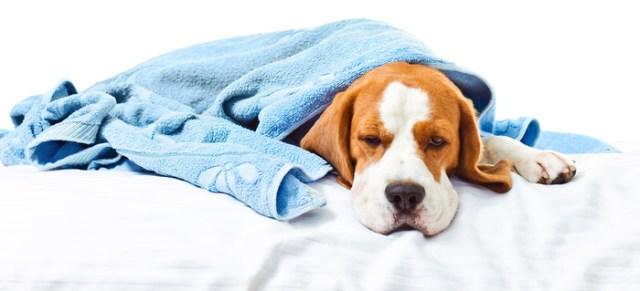 Аптечка для домашнего животного. 15 обязательных препаратов