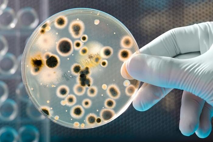 Что такое микробы? Один тип микробов вызывает только одно заболевание