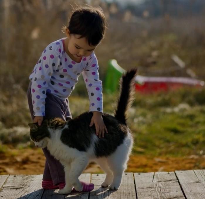 10 научных доказательств того, что вам срочно нужна кошка