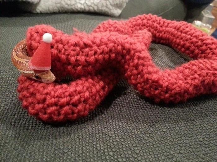 Необычный подарок— рождественский свитер для змеи