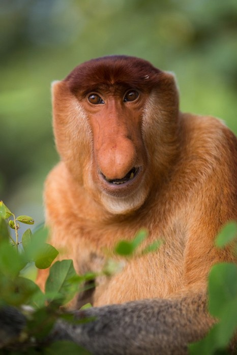 27 самых странных животных на Земле