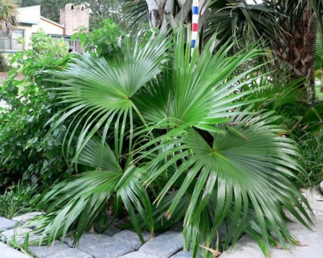 Сколько видов пальм существует?