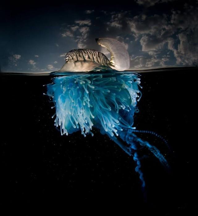 Тайны подводного мира: фотограф показал, что скрывает океан