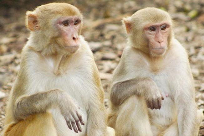 Кто из живых существ самый умный?