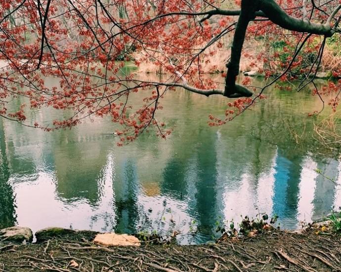 Весна в большом городе: красивые фотографии Нью Йорка