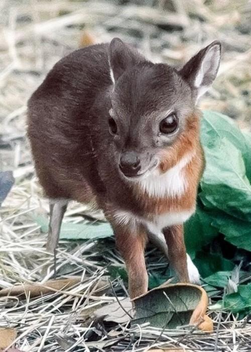 Милые зверюшки, живущие на нашей планете
