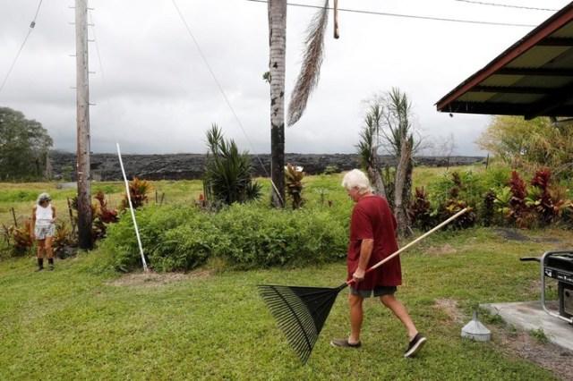 Бананова пальма Другого проти кокосової пальми «Алінки»