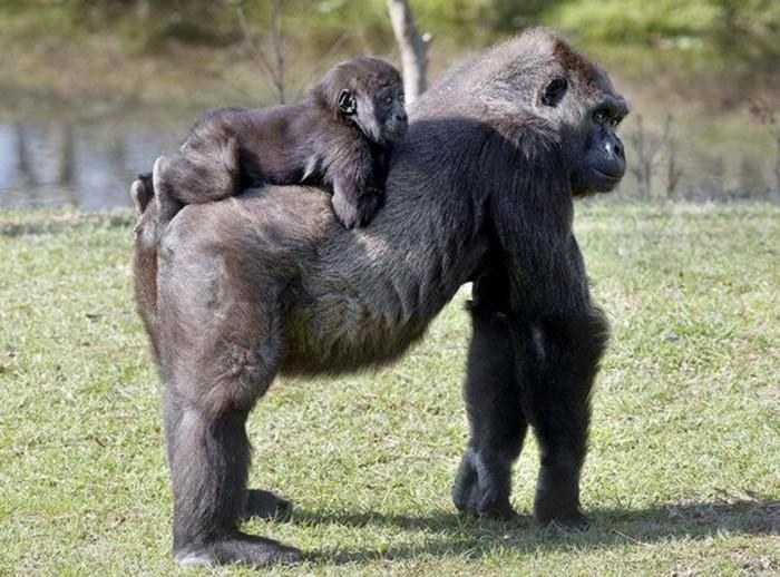 Жизнь в зоопарке в фотографиях: прекрасные зверята в невыносимых условиях