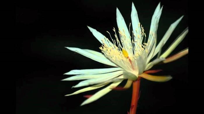 10 самых дорогих цветов в мире