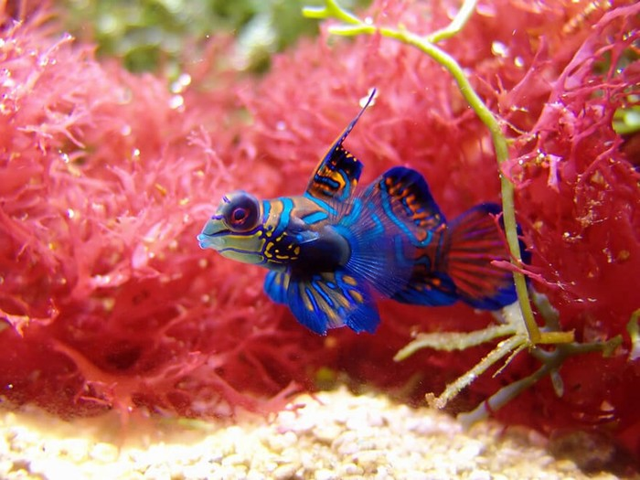 11 самых красивых животных в мире