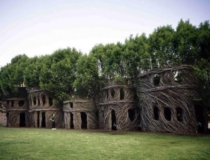 5 необычных сооружений в гигантских деревьях