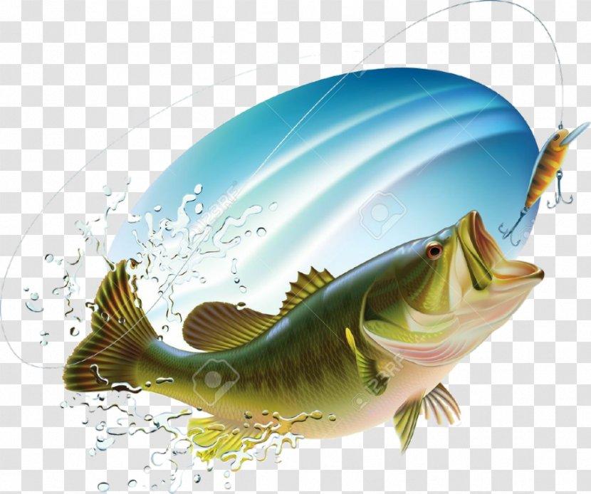 Largemouth Bass Fishing Drawing Transparent Png