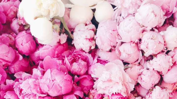 WATCH  12 Surprising Facts All Peony Enthusiasts Should Know     Peony Facts grow in South