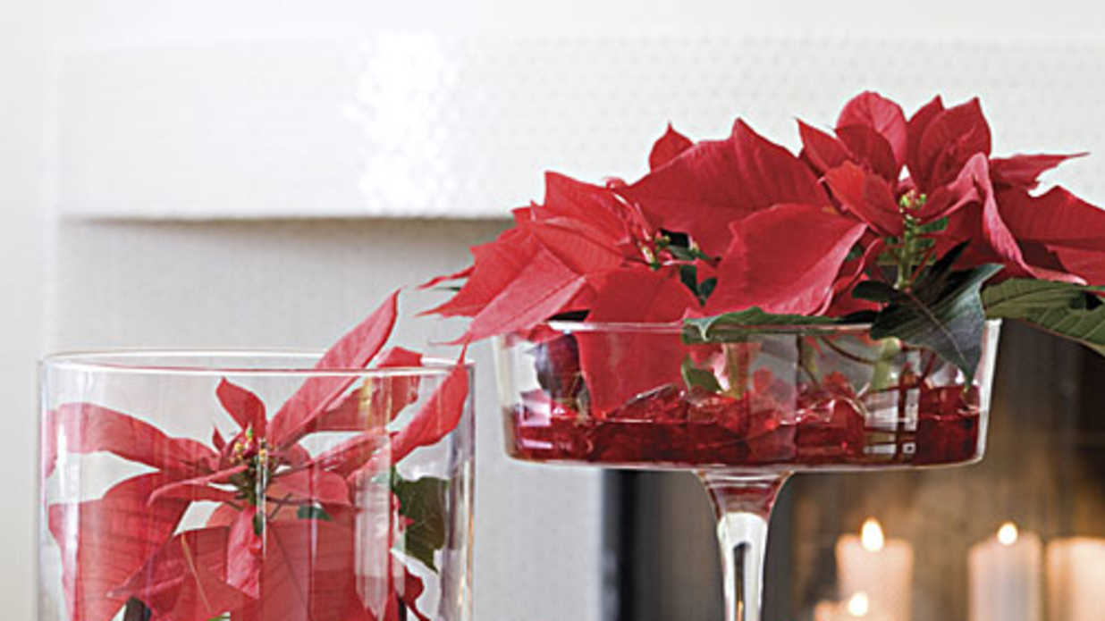Centerpiece Poinsettias Show Off Your Poinsettias