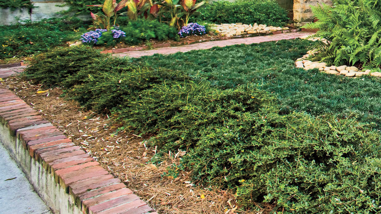 Microsize Your Garden - Easy, No Mow Lawns - Southern Living on No Mow Backyard Ideas id=46027