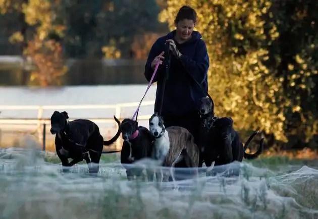 awomanwalksherdogsthrou - Miles de arañas invaden pueblo en Australia obligando a sus habitantes a evacuar