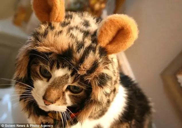 Gorro de leon para gatos