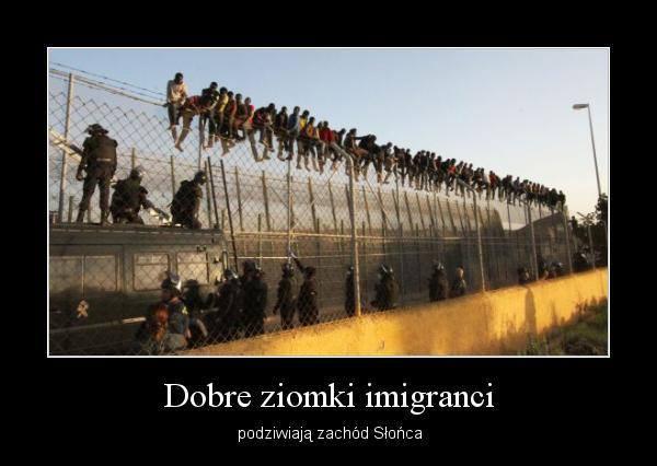 """Dobre ziomki imigranci"""" - najśmieszniejsze i najbardziej kontrowersyjne memy  o uchodźcach – Demotywatory.pl"""