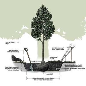 Overview | How to Plant a Tree | This Old House