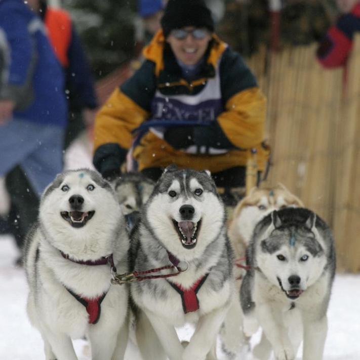Corsa su slitta con cani