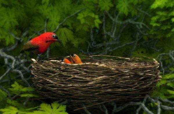 birds weth nest 3D   CGTrader