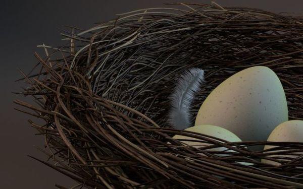 3D Bird nest   CGTrader